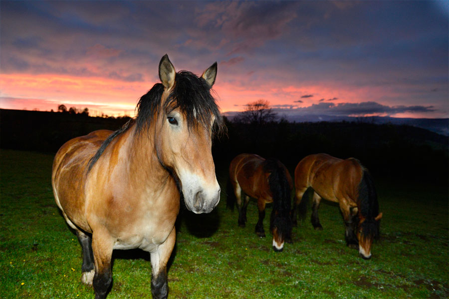elevage_cheval_race_auvergne1