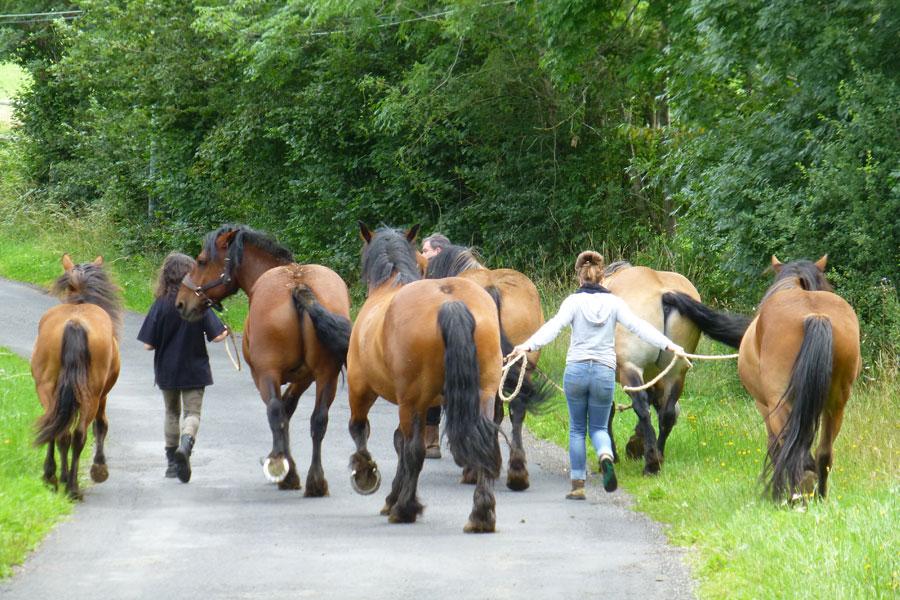 elevage_chevaux_aubrac_troupeau